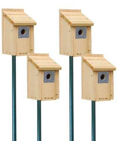 Woodlink Bluebird House Package with (Birdhouse Mount)
