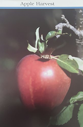 Colonial American Photo-Fun Activities - Apple Harvest and 7 others