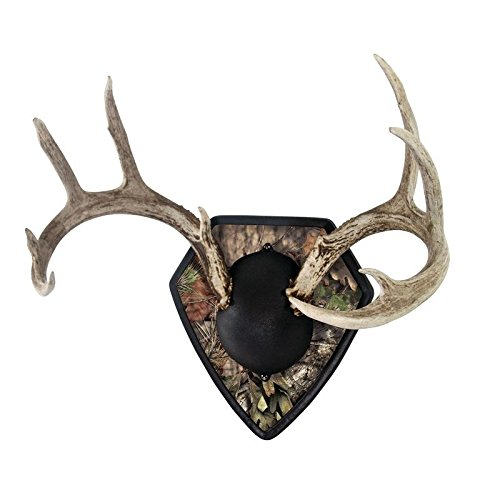 Allen Big Buck Trophy Mount Kit with Skull Cover and Engravable Plate