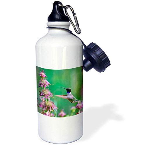 - 3dRose Danita Delimont - Hummingbirds - Black-chinned Hummingbird Male at bee Balm, Texas, USA.  - 21 oz Sports Water Bottle (wb_315064_1)