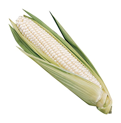 Burpee Silver Choice Sweet Corn Seeds 200 seeds