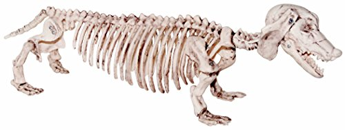 21 Inch Plastic Dachshund Dog Skeleton Halloween (Plastic Halloween Dog Skeleton)