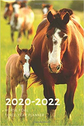 3 Year Planner 2020-2022 Horse Foal Three Years Monthly ...