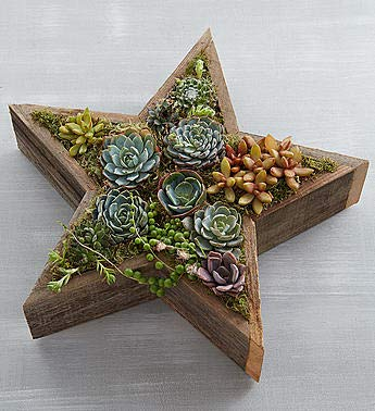 1800Flowers Succulents in Star Shape Reclaimed Wood Planter by 1-800-Flowers.com (Image #2)