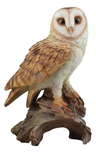 Ebros Realistic Nature Wildlife Common Barn Owl Pe