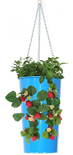 HIT B Galvanized Heavy Gauge Steel Hanging Strawberry Floral Planter, Blue