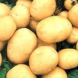 buy Rare Ukrainian Organic Vegetable True Potato Seeds asol, Early Solanum tuberosum now, new 2020-2019 bestseller, review and Photo, best price $1.98