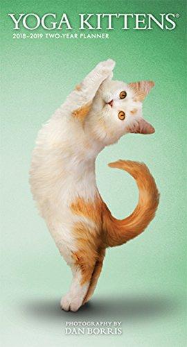 Yoga Kittens 2018 3.5 x 6.5 Inch Two Year Monthly Pocket Planner, Animals Humor Kitten (Cat Calendar Yoga)