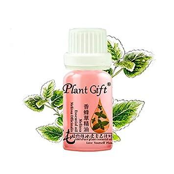 Amazon.com: Planta regalo orgánico Melissa officinalis ...