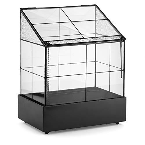 H Potter Glass Terrarium for Plants Wardian Case Succulent Planter War160