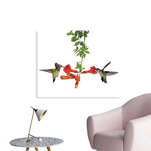 - J Chief Sky Hummingbirds Decor Wallpaper Sticker Two Hummingbirds Sip Nectar from a Trumpet Vine Blossoms Summertime Decor Mural for Home W32 xL24