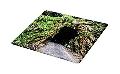 Ambesonne Dark Forest Cutting Board, Real Life Shot Taken of the Haunted Nada Tunnel in Kentucky Outdoor Scene, Decorative Tempered Glass Cutting and Serving Board, Small Size, Multicolor