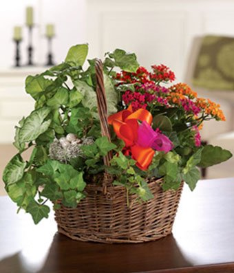 Indoor House Plants Basket on indoor plant cage, indoor plant watering can, indoor plant cart, indoor plant box, indoor plant trellis, indoor plant ladder, indoor plant cabinet, indoor plant trough, indoor plant stool, indoor plant vase, indoor plant with lights,