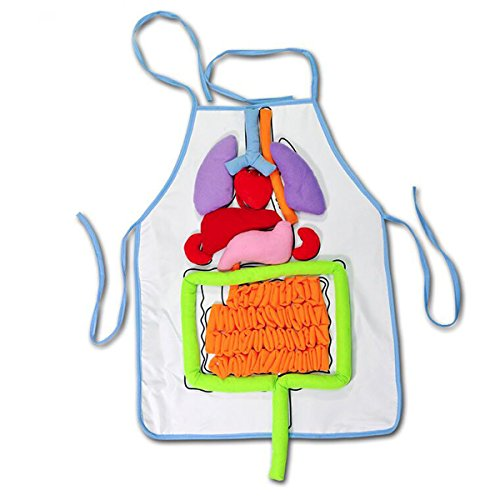 New Sky Enterprises Human Body Anatomy Play Set Creative School Education Teaching Aids Simulation Human Organs Diagram Apron For Children's Basic Skills Development Toy