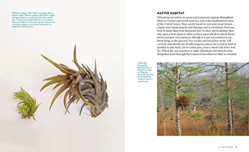 Air Plants: The Curious World of Tillandsias by Workman Publishing/Timber Press (Image #3)