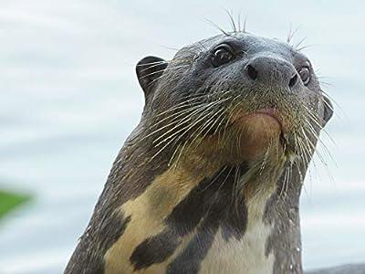 Giant Otter Refuge