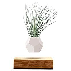 FLYTE Lyfe Vaso fluttuante, Legno, Bianco, 15 x 15 x 15 cm