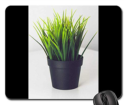 Mouse Pad - Plant Green Pot Nature Herbs Fresh -