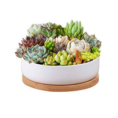 Succulent Planter Ceramic with Bamboo Tray,Y&M(TM) 6 inch Modern White Ceramic Round Design for Succulent Planter Cactus Pots Decorative Flower Holder Bowl Basin,Tub by Y&M(TM)