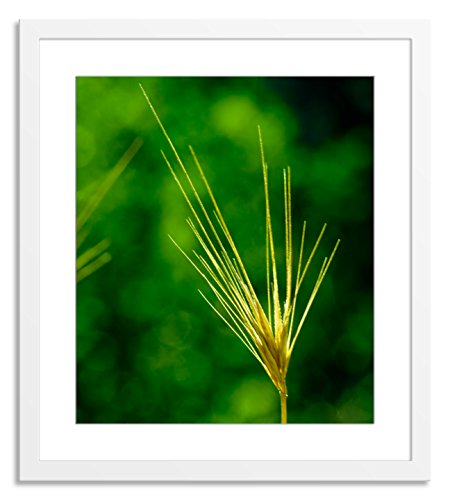 Gallery Direct AI186A-32x37-PF-F0175-ML002 Zen Ixx by Sia Aryai Artwork on Paper with White, Clean and Simple Frame, 42