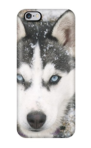 Durable Siberian Husky Dog Back Case/cover For Iphone 6 Plus Sending Free Screen Protector