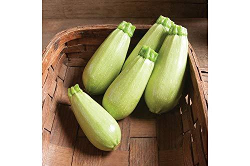 David's Garden Seeds Zucchini Magda SL2913 (Green) 25 Non-GMO, Hybrid Seeds (Best Organic Heirloom Seed Catalogs)