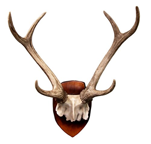 Rustic Partial Antlers Mounted Figurine