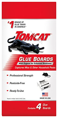 Tomcat 0363101 Pest Glue, 1 Pack, Clear