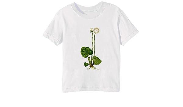 Herbario Niños Unisexo Niño Niña Camiseta Cuello Redondo Blanco Manga Corta Tamaño XL Kids Unisex Boys Girls T-shirt White X-Large Size XL: Amazon.es: Ropa y accesorios