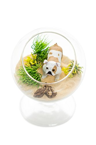 (Nautical Crush Trading Gift | Terrarium Kit | Bulldog Lovers Terrarium Design Kit | Dog Breed Series | Complete DIY Gift Set | Glass Globe w/Stem TM (Bull)