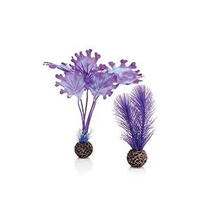 biOrb 46079.0 Kelp Set Small Purple Aquariums 101
