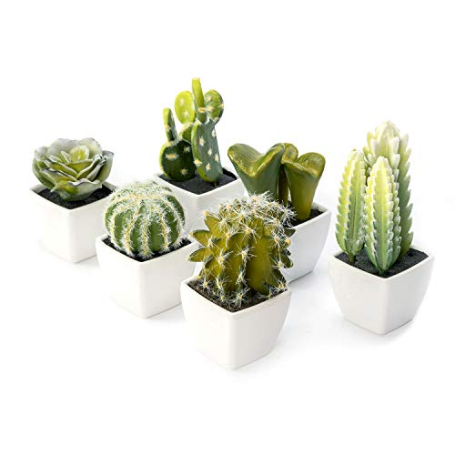 Nattol Artificial Mini Succulent & Cactus Plants in White Cube-Shaped Pots, Set of 6 …