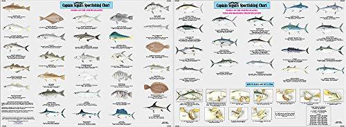 - Fish of the North Atlantic Identification Chart - Laminated Nautical Navigation & Fishing Chart by Captain Segull's Nautical Sportfishing Charts   Chart # FNA503