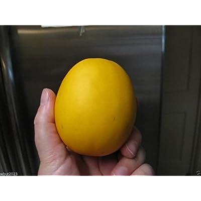 VINE PEACH Melons Seeds (Cucumis melo) a.k.a. Mango Melon, Certified Organic.(100 Seeds) : Garden & Outdoor
