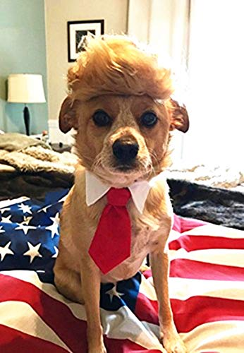 Dog In A Wig (FMJI Trump Style Pet Costume Dog Wig, Donald Dog Clothes with Collar & Tie Head Wear Apparel Toy for Halloween, Christmas, Parties,)
