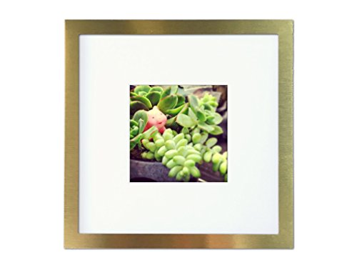 Tiny Mighty Frames - Brushed Metal, Square Instagram Photo Frame, 8x8 (4x4 Matted) (1, Gold) - Fits 4x4 inch prints matted, 8x8 without mat (Window 3.75 x 3.75 or 7.5 x 7.5) Individual frame outside edge dimension: 9 x 9 x 0.5 inches Material:Glass and aluminmum - picture-frames, bedroom-decor, bedroom - 41SjTeIztfL -