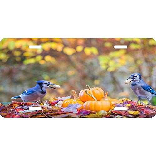 RAEDGEC Two Blue Jays Eating Peanuts Autumn Maple Leaves and Pumpkins Aluminum Metal License Plate Frame Funny License Plate Holder 2 Hole and Screws