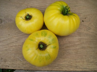 David's Garden Seeds Tomato Beefsteak Yellow Mortgage Lifter S49207TF (Yellow) 25 Organic Heirloom Seeds