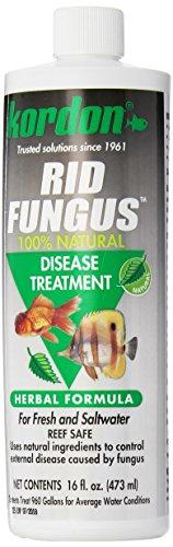 Kordon #39856 Rid Fungus- Disease Treatment for Aquarium, 16-Ounce by Kordon
