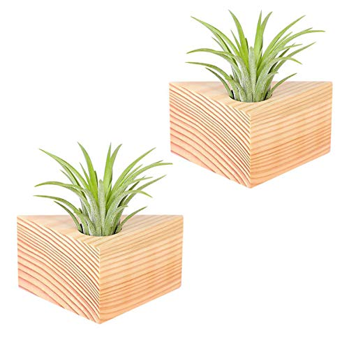 Air Plant Holder,2 Pack Tillandsia Holder Triangle Geometric Air Plant Holders Container Tabletop Stand Vase Pot with Magnet for Hanging Air Plants Indoor Wall Home Decor
