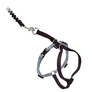 PetSafe Come With Me Kitty Harness and Bungee Leash, Harness for Cats, Medium, Black/Silver