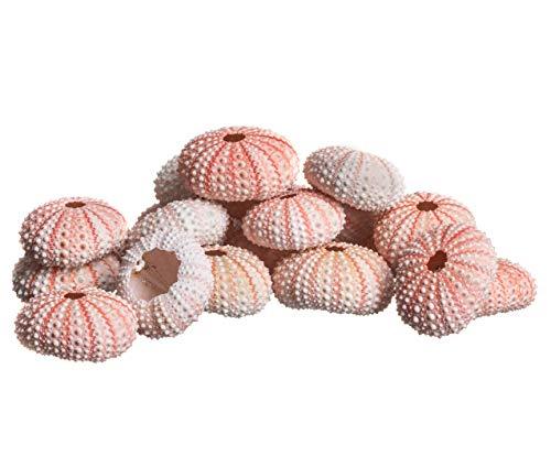 - Sea Urchin |25 Pink Sea Urchin Shell |25 Pink Sea Urchin Shells for Craft and Decor | Plus Free Nautical Ebook by Joseph Rains