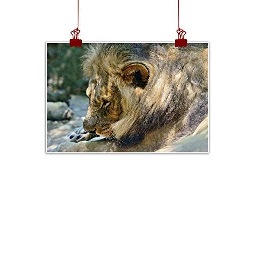 duommhome Abstract Painting Male Lion Lay on The Ground Decorative Painted Sofa Background Wall 24
