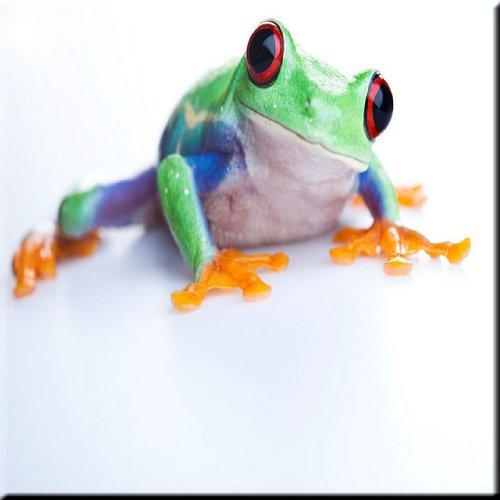 Frog Tile (Rikki Knight Cheeky Macro Frog Design Ceramic Art Tile, 12
