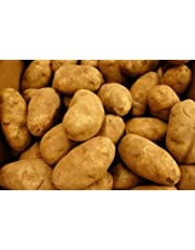 POTATOES RUSSET FRESH PRODUCE 5 LBS