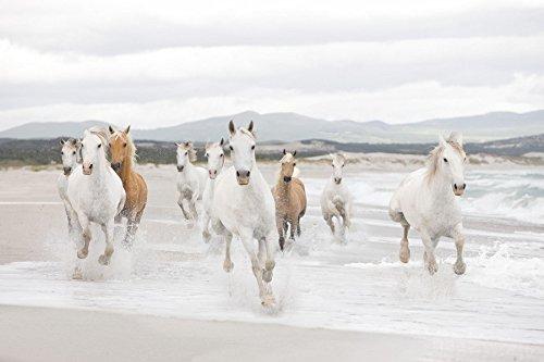 Wall Mural, Photo Wallpaper WHITE HORSES 12'1