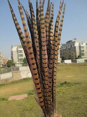 FidgetGear Wholesale Beautiful Pheasant Tail Feathers 20-22 inches/50-55 cm Natural 10 pcs