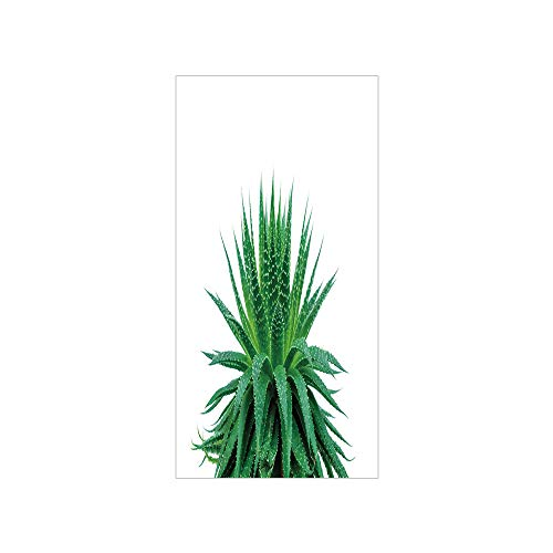 3D Decorative Film Privacy Window Film No Glue,Plant,Medicinal Aloe Vera with Vibrant Colors Indigenous Species Alternative Natural Remedy,Fern Green,for Home&Office