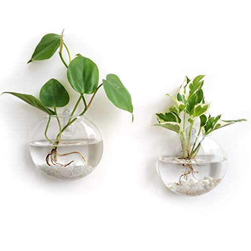 Mkono 2 Pack Wall Hanging Glass Terrariums Planter Flower Vase for Hydroponics Plants, Home Office Living Room Decor, ()
