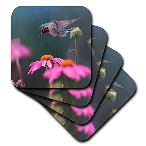 3dRose Danita Delimont - Hummingbirds - Male Ruby-throated Hummingbird foraging for nectar. - set of 8 Ceramic Tile Coasters (cst_314578_4)